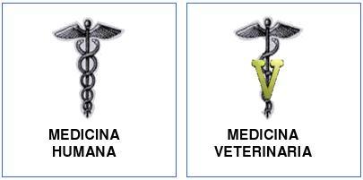 medicina_veterinaria_humana/medicina_veterinaria
