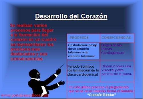 Desarrollo_embriologia_funcionamiento_corazon_1