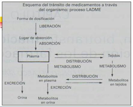 farmacocinetica/farmacocinetica_2