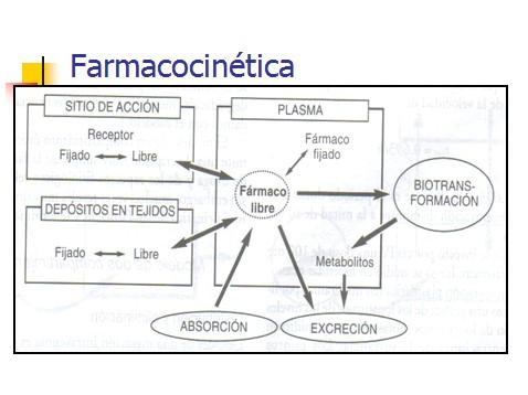 farmacocinetica/farmacocinetica_4