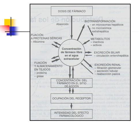 farmacocinetica/farmacocinetica_5