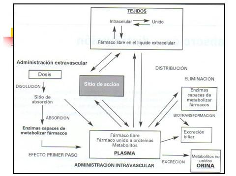 farmacocinetica/farmacocinetica_6