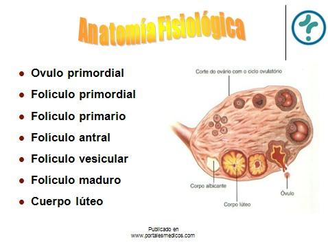 fisiologia_reproductiva/anatomia_fisiologica_genitales_internos_mujer