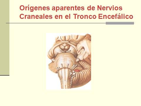 nervio_trigemino_neuralgia/nervio_trigemino_neuralgia_trigeminal_3