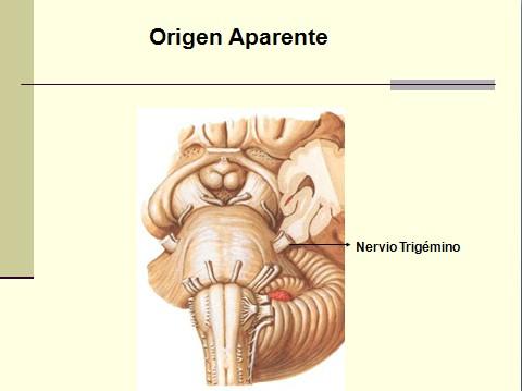 nervio_trigemino_neuralgia/nervio_trigemino_neuralgia_trigeminal_origen