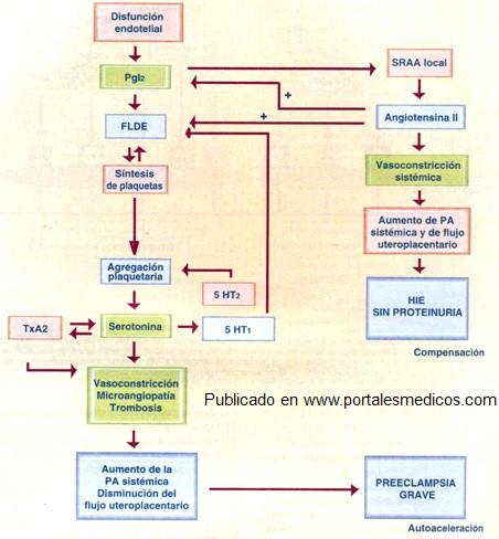 Placentacion