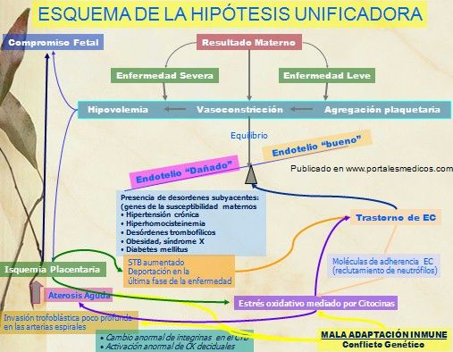 fisiopatologia aborto:
