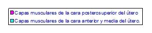 recorrido_arteria_uterina_ligamento_redondo/anatomia_arteria_ligamento_redondo_2