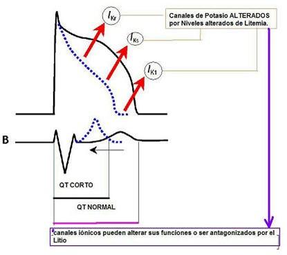 teoria_litio_neurotransmision_sinaptica/litio_potencial_accion_canales_potasio