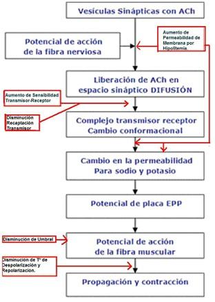 teoria_litio_neurotransmision_sinaptica/litio_potencial_accion_canales_potasio_sinapsis
