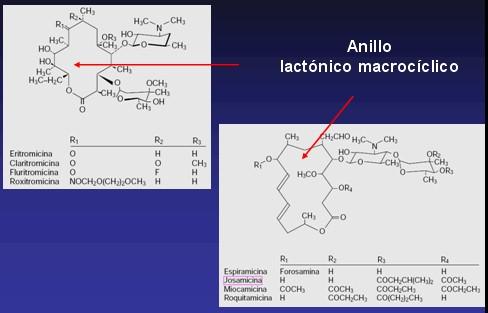 aminoglucosidos5