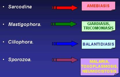 antiprotozoaricos