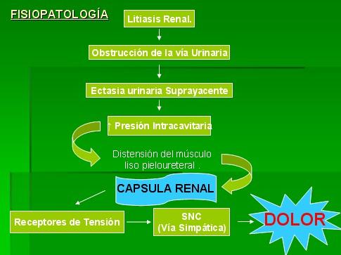 colico_nefritico_fisiopatologia