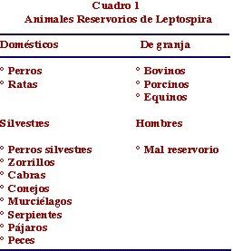 leptospirosis_animales_reservorios