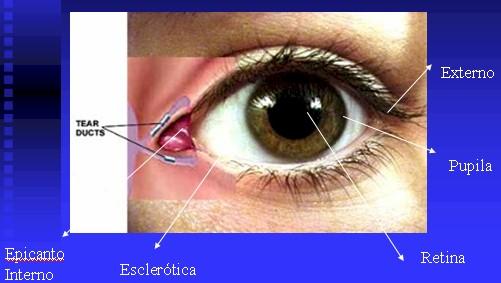 oftalmologia_anatomia_ojo