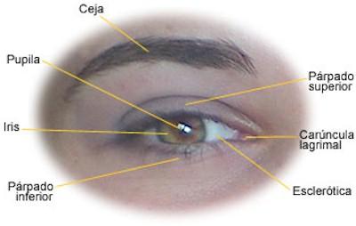 oftalmologia_anatomia_ojo2