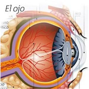 oftalmologia_anatomia_ojo4